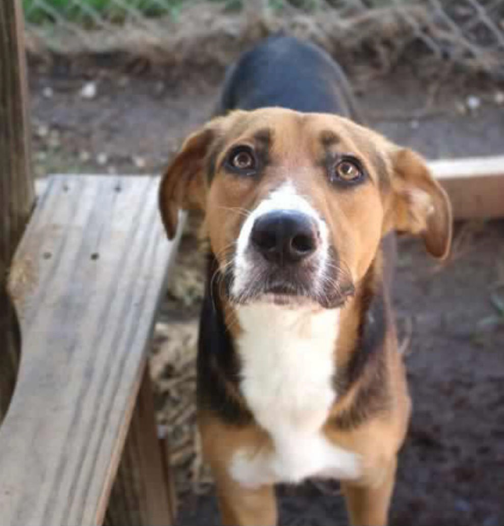 Cheaha Regional Humane Society: Alvin