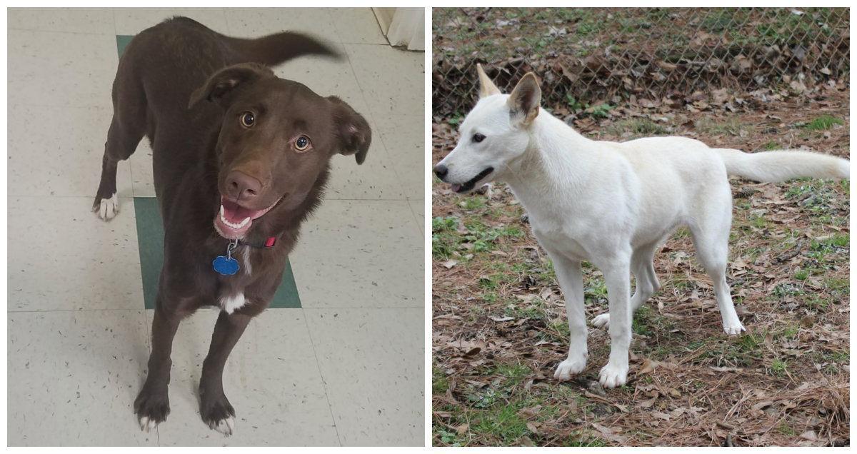1-18-18 Pet of week collage.jpg