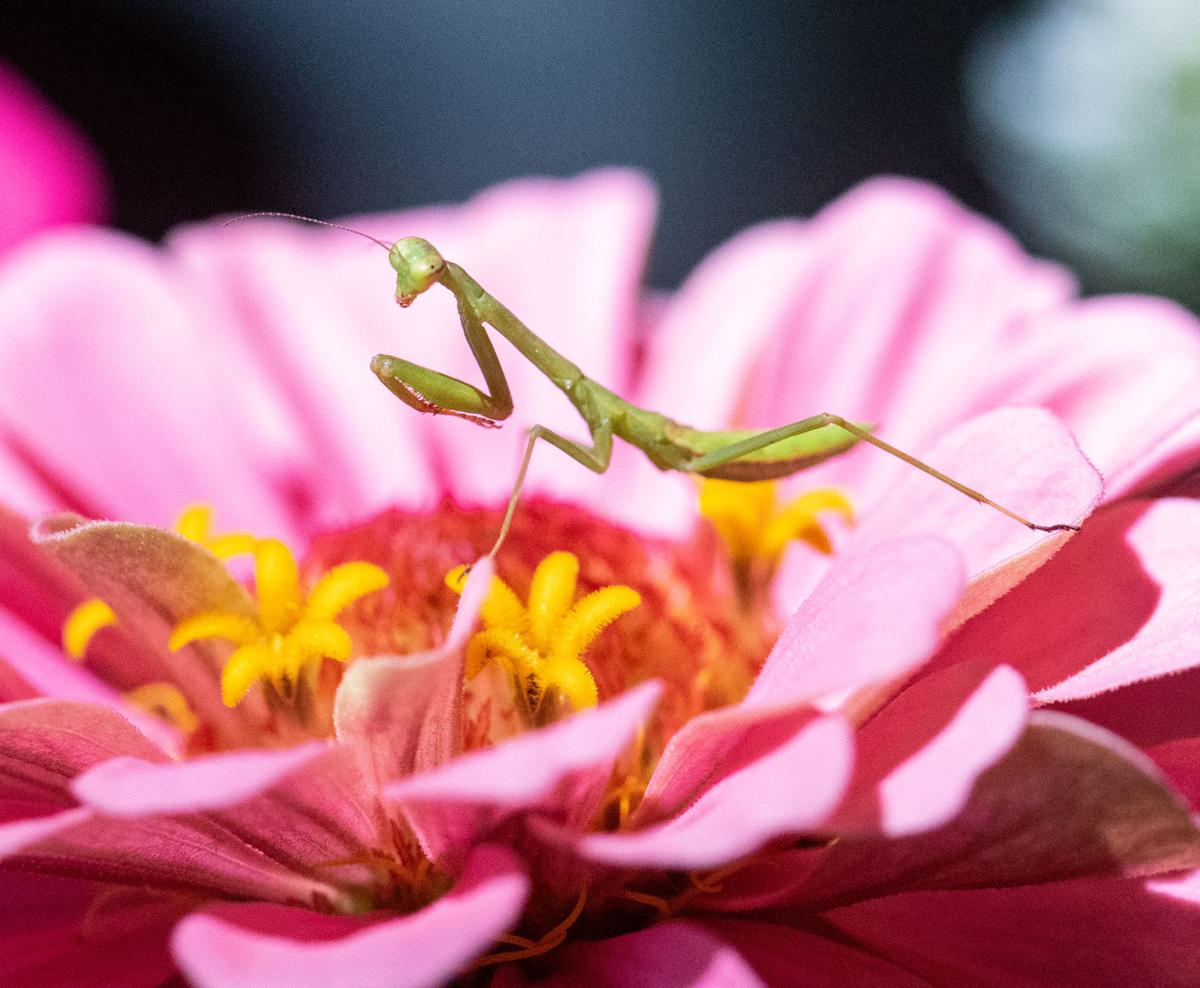 bugs and flowers5-bc.jpg