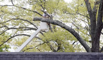 Quintard tree removal