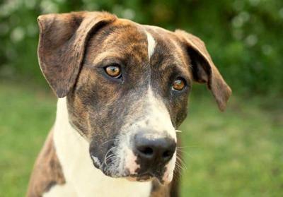Anniston Animal Shelter: Nina
