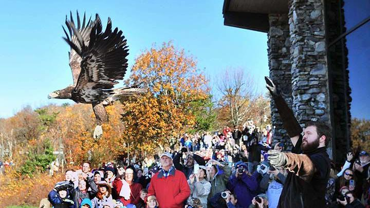 Rehabilitated Bald Eagle Released At Mount Cheaha