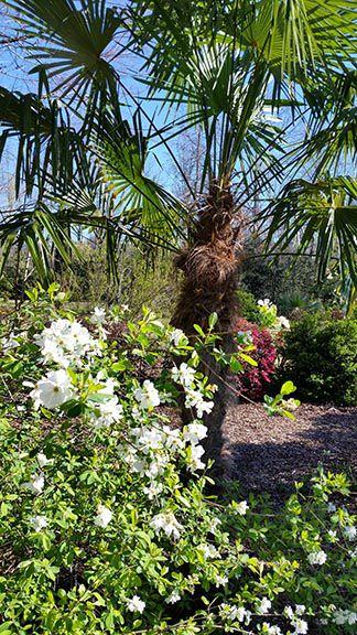 Ron Caldwell's garden