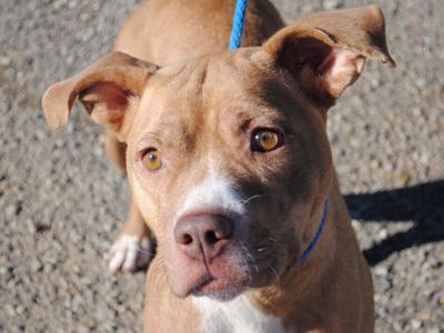 Anniston Animal Shelter: Rikki