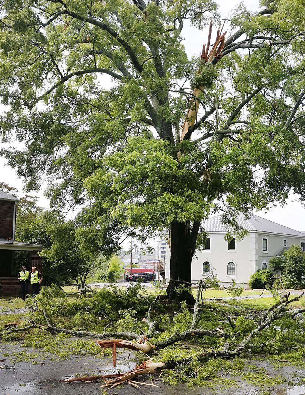 Quintard tree down