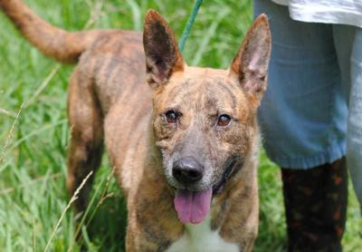 Anniston Animal Shelter: Buzz