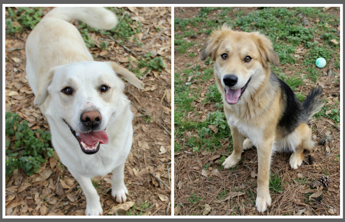 Carter, Tucker are Pets of Week at Pell City Animal Control Center
