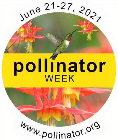 Image Courtesy Pollinator Partnership