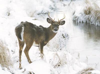 Natural Resources Board discusses 19-day gun deer hunt