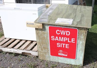 CWD test