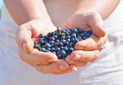 Blueberries by the handful