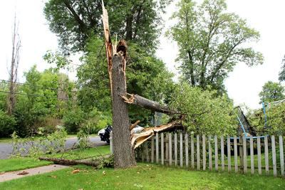 Noble Tree Down