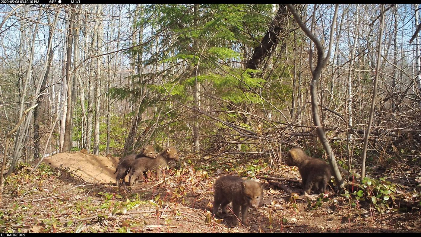Red Cliff Trailcams1