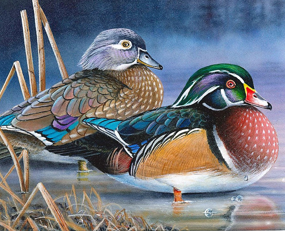 2020 Waterfowl Stamp