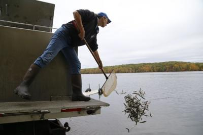 Trout are stocked in Washburn, Burnett County waters by DNR
