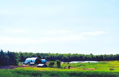 Boness Dairy Farm