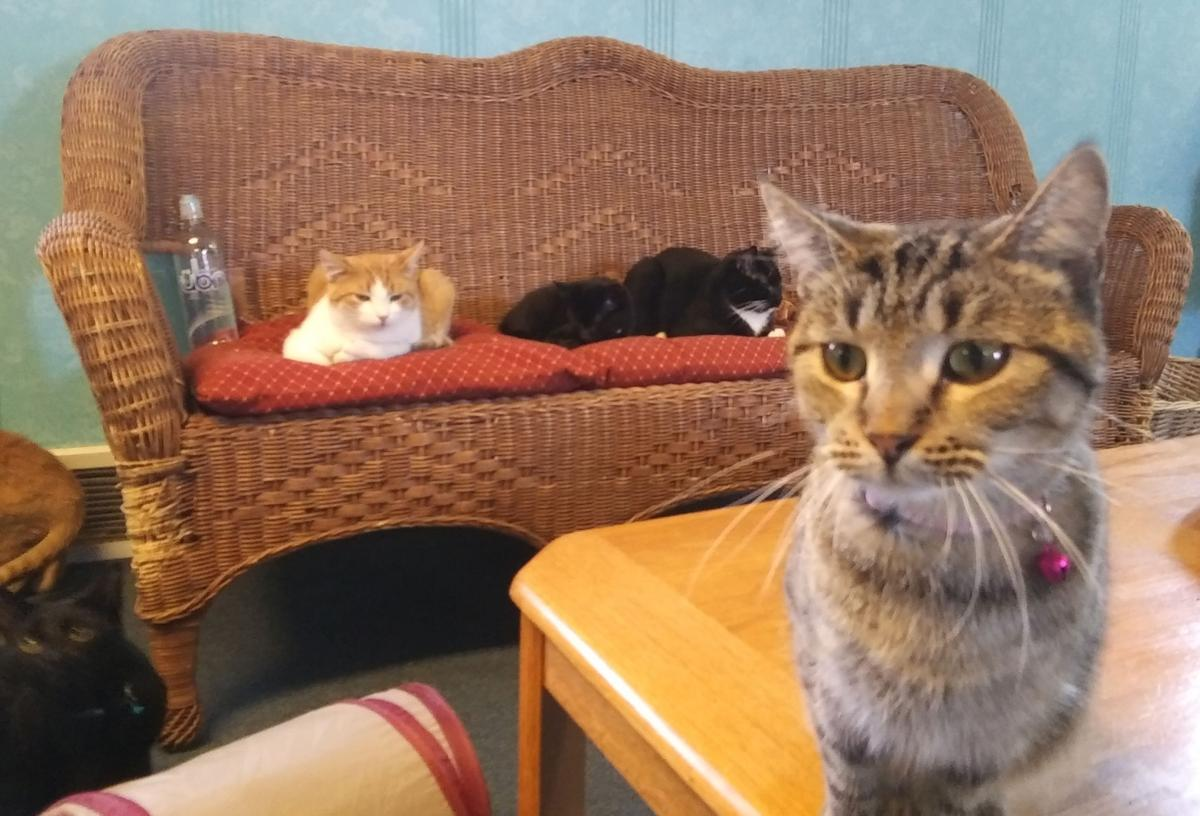 CatsLounging.jpg