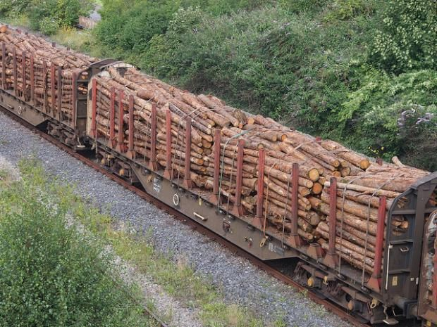 Northern Timber Industry Facing Rail Car Shortage Government