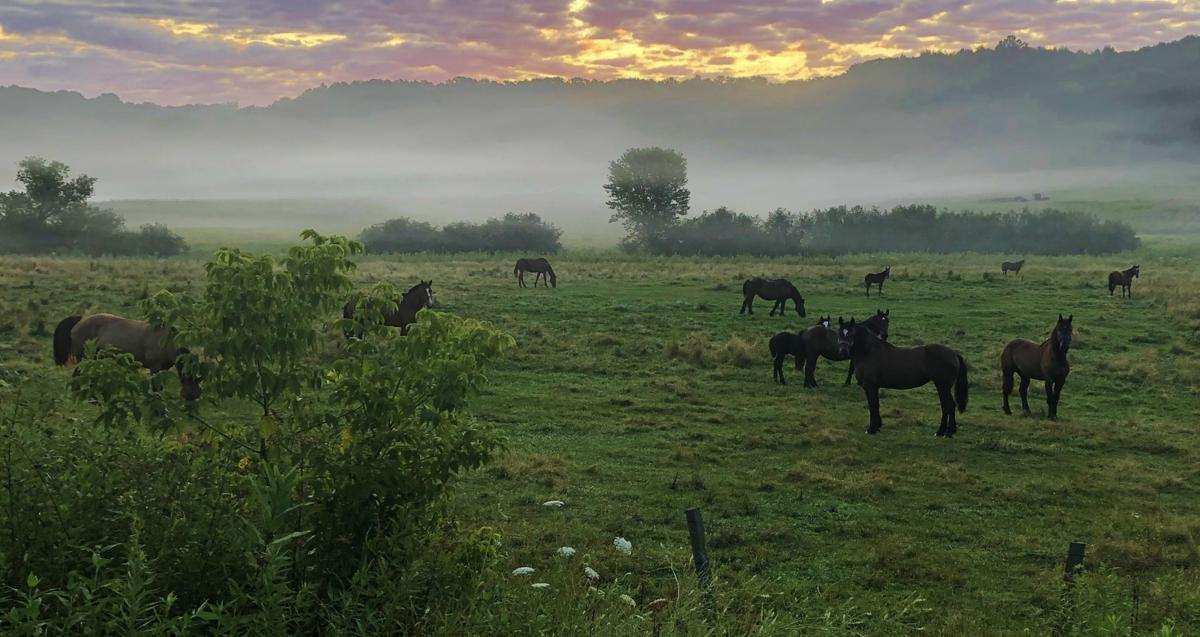 Horses graze in a field in an early-morning fog. Valley fog is common in the La Crosse area this time of year..jpg