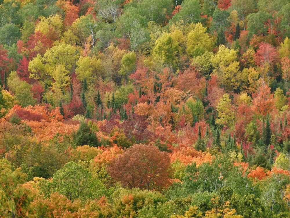 An autumn kaleidoscope