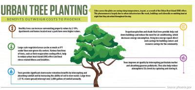 Urban tree planning