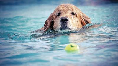 Keeping pets cool