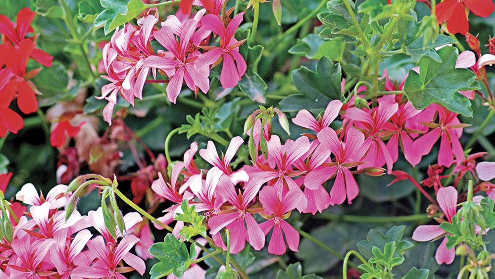 Fall Flowers Plants Gardening Tips From Local Experts