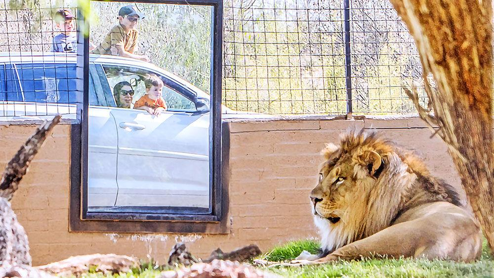 Phoenix Zoo stays connected to guests with Cruise the Zoo