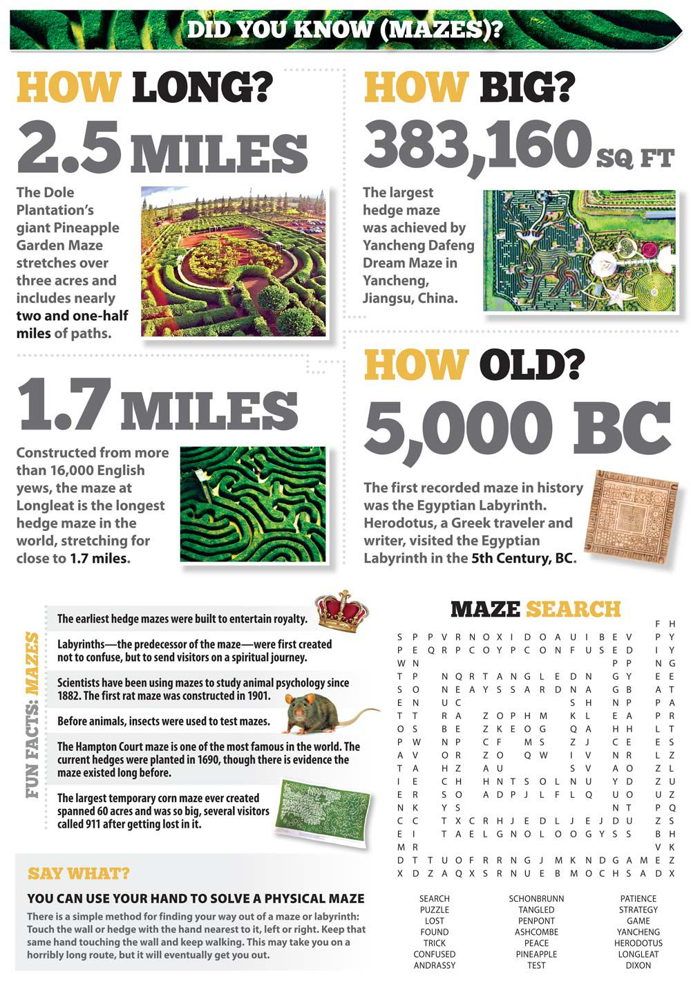 Did you know? Mazes | News & Stories | arcadianews com