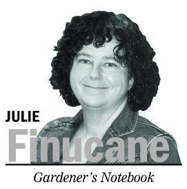 JULIE FINUCANE