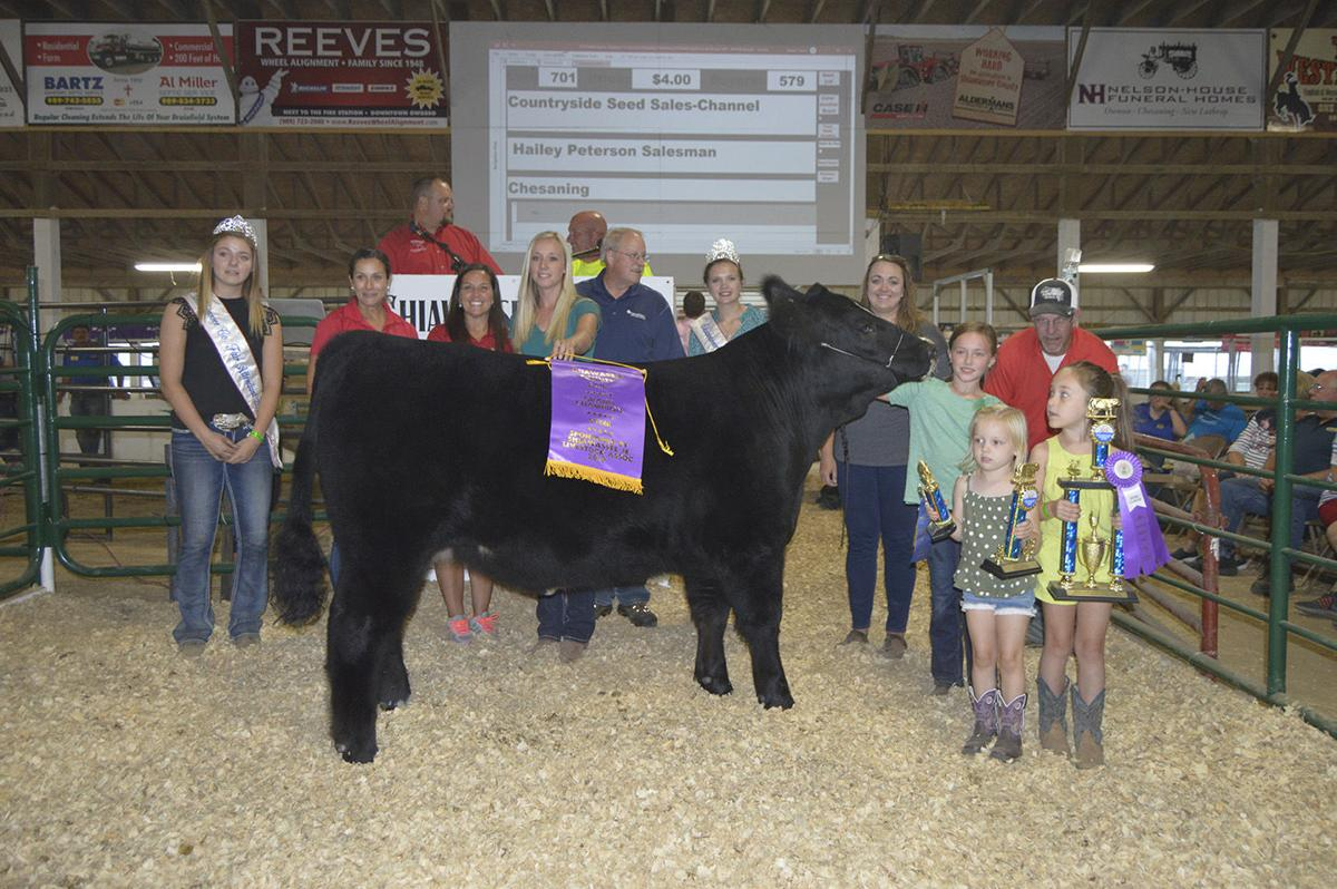 Grand champion beef steer
