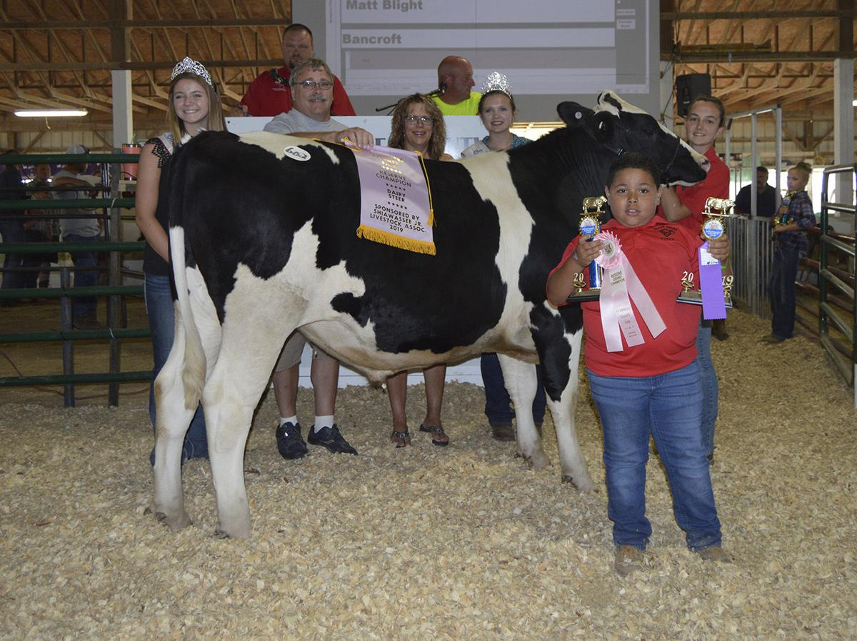 Reserve champion dairy steer