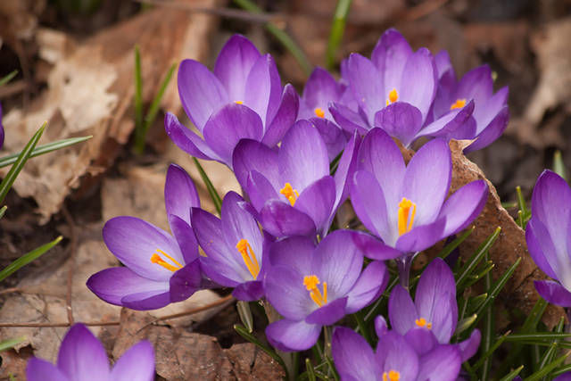 Think ahead to plan spring color explosion