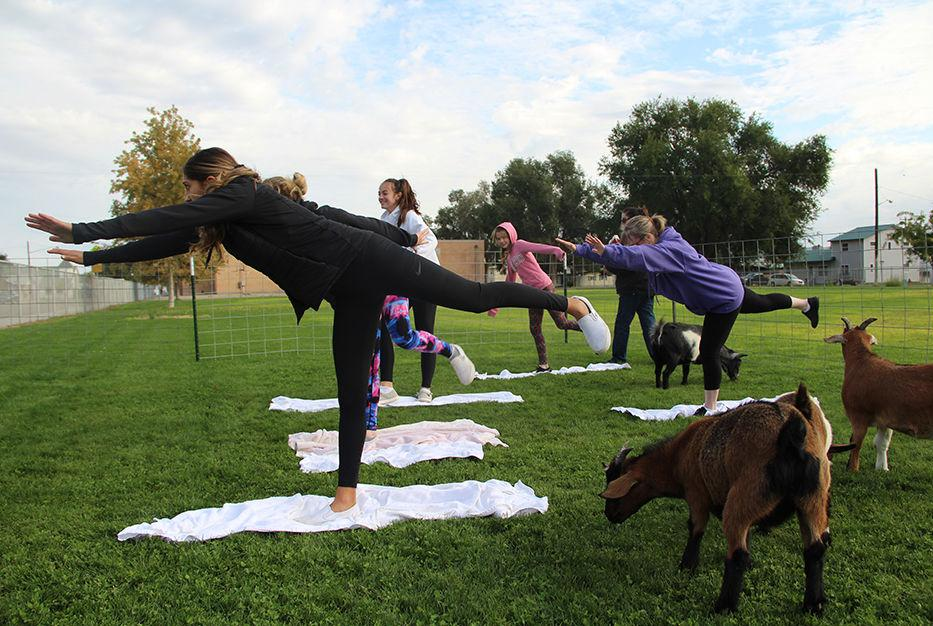 Goats join yoga class to benefit animal shelter