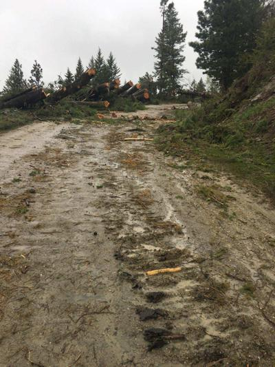 Public reminded to be aware of logging operations around Bogus Basin