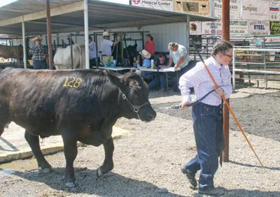Livestock auction wraps up the fair