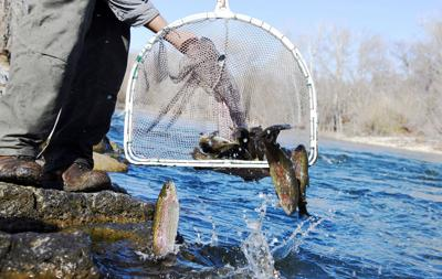 Hatchery highlights for October: Notable fish stockings around the state