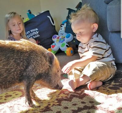 Planning and Zoning deals setback to porcine progeny