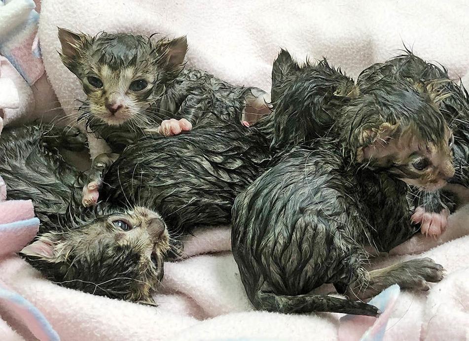 Weeks-old kittens abandoned in sack on side of road now being syringe-fed by volunteer