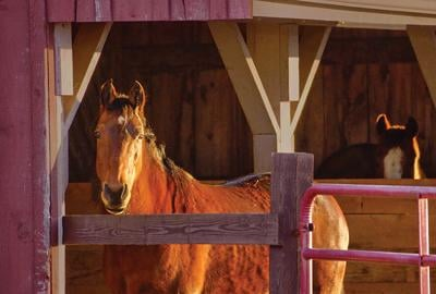 2 serious horse viruses confirmed in Oregon, including Malheur County