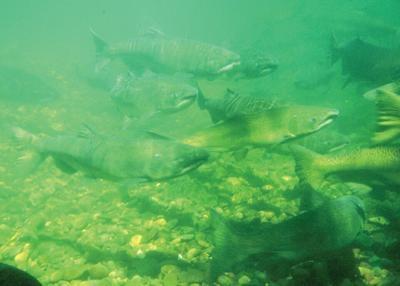 States set initial 2021 Columbia River spring Chinook recreational seasons