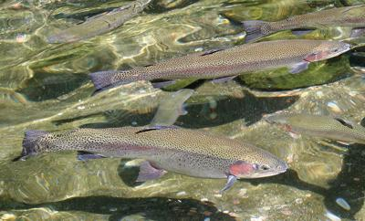 Officials lift gamefish limits at Malheur Reservoir due to drought