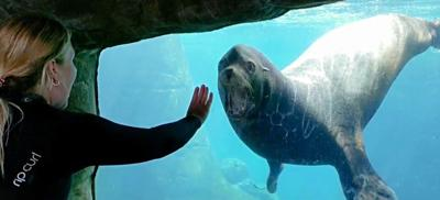 Aquarium mourns loss of beloved sea lion