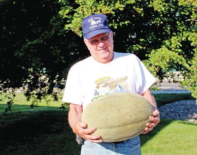 Mega melon: Cantaloupe takes on oblong shape at 40 pounds