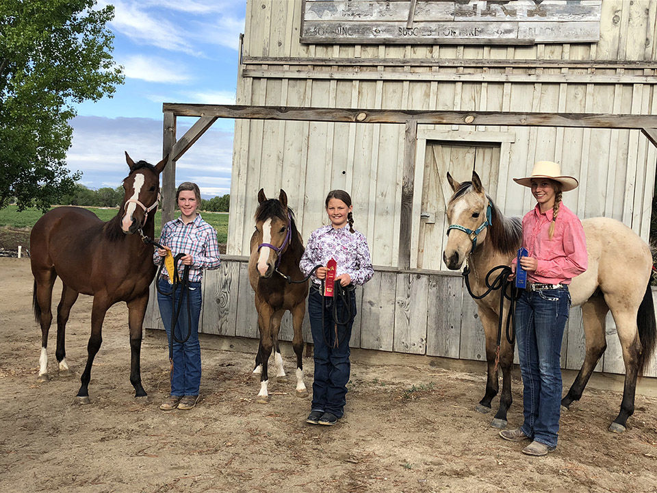 4-Hers with horse projects hone skills