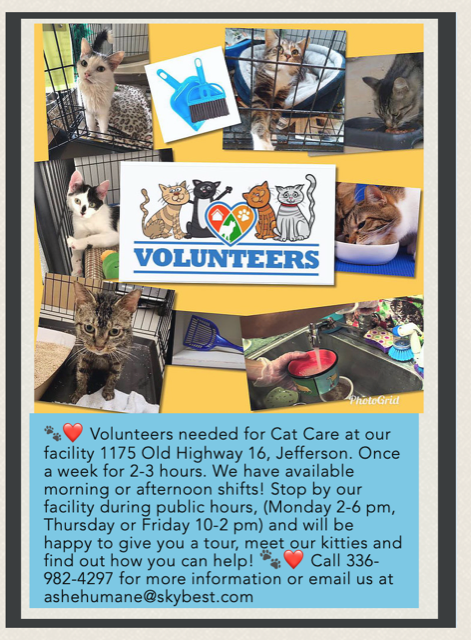 Ashe County Humane Society volunteers needed