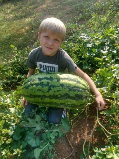 36 pound watermelon