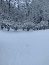 Ashe County snow 1/8 120