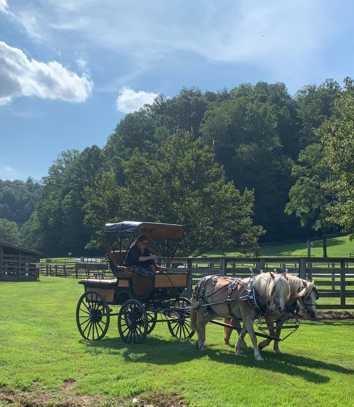 Horse drawn carriage rides are offered at the annual Daniel Boone Festival in Ferguson.