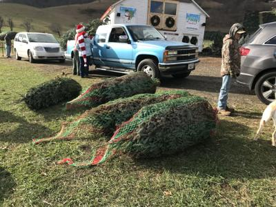 Frosty's Choose and Cut Christmas trees